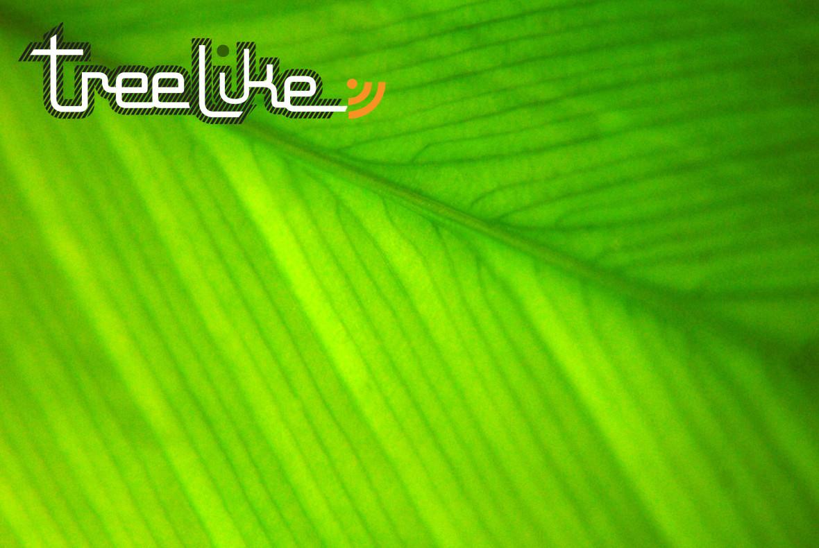 feuille_treelike